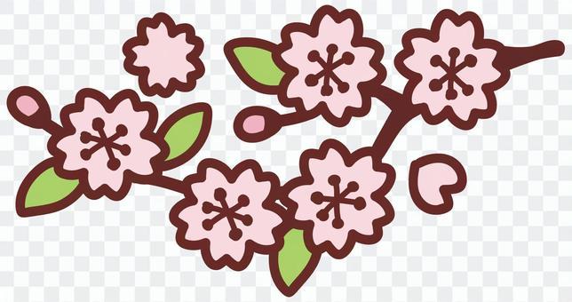 櫻花<分支>