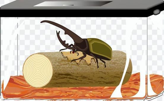 甲蟲外國赫拉克勒斯容器
