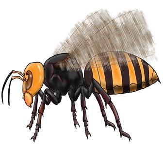 Giant hornet, giant bee monster sideways