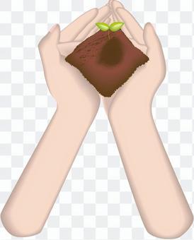 芽植物自然手手土壤圖像