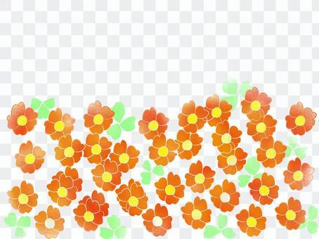 Oxalis orange
