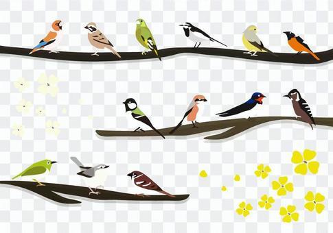 熟悉的鳥1