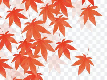 逼真的秋季楓木材料