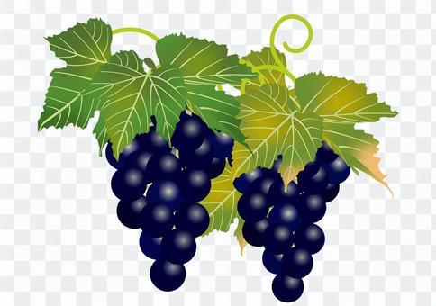 美味的葡萄13