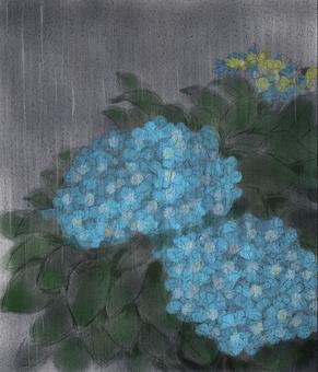 繡球花和雨