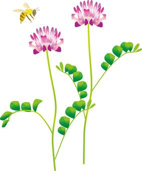 Astragalus and honeybee
