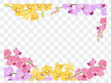 Phalaenopsis spring frame