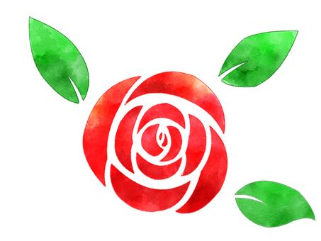 水彩風格玫瑰(玫瑰)紅