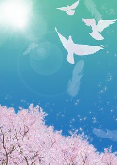 비둘기가 날아 푸른 하늘 벚꽃