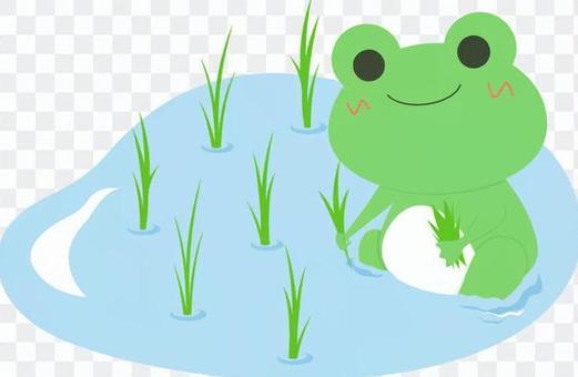 青蛙 - 水稻種植