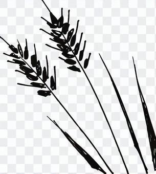 大麥的插圖