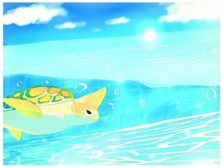 海龜背景游泳