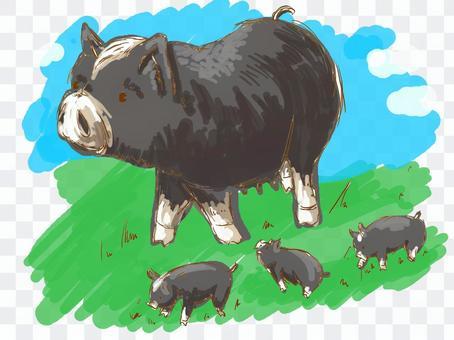 父母和年輕的黑豬在草地上散步