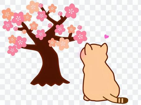 梅花樹和茶虎斑貓