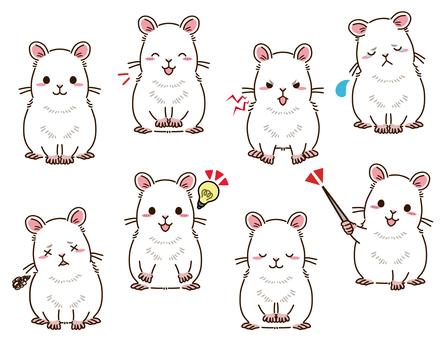 倉鼠(白色)姿勢合集