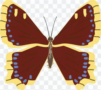 哀悼披風,N科,昆蟲