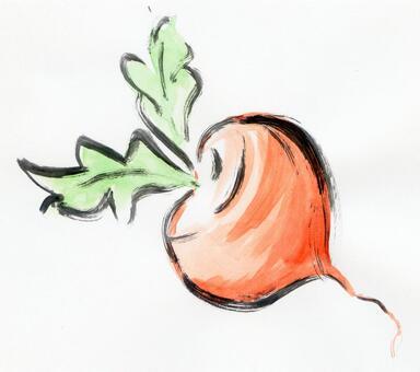 迷你蘿蔔,蘿蔔