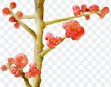 紅色李子水彩圖片(垂直線)