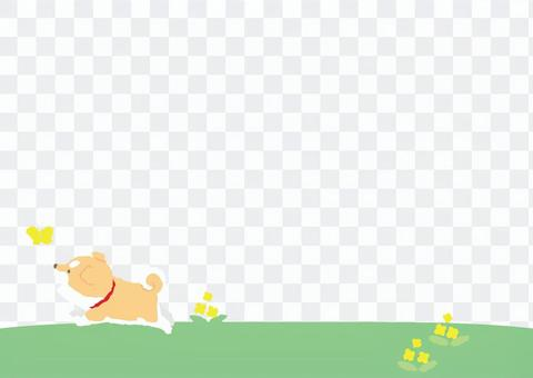 Shiba puppy - You will want to hang out spring
