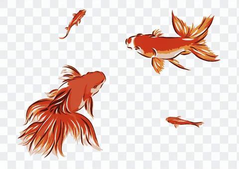 金魚【2】