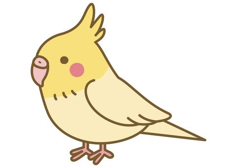 一隻可愛的鸚鵡的插圖