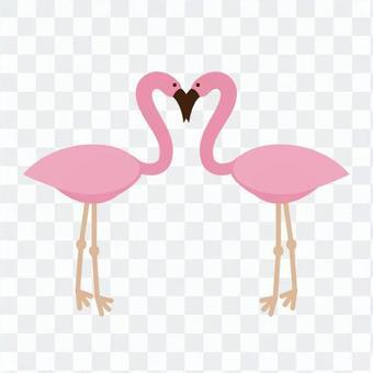 A couple of flamingos