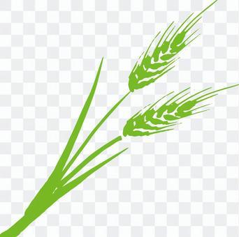小麥a_green_cs