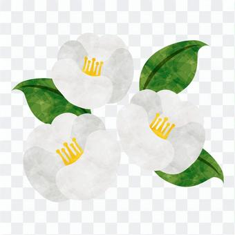 Winter flowers / white camellia