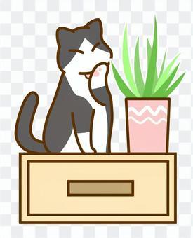 修飾貓和植物