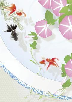 牽牛花_長的大小在一個魚缸裡