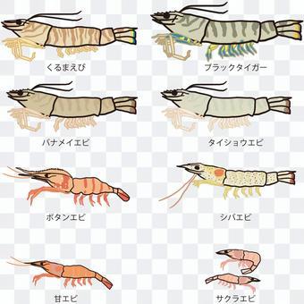 蝦種類一覽