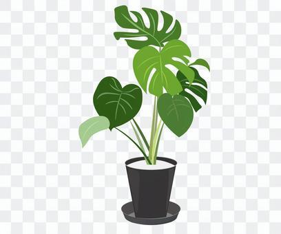 觀賞植物黑色花盆