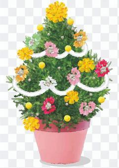 聖誕盆栽的植物
