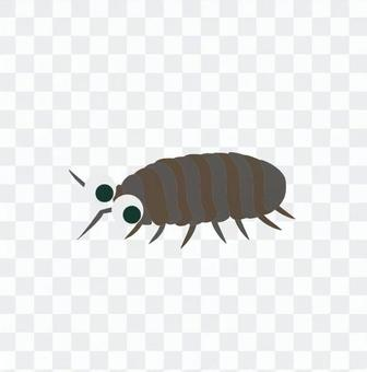 Dung beetle 3