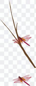 貝尼蜻蜓蜻蜓蜻蜓家庭昆蟲飛