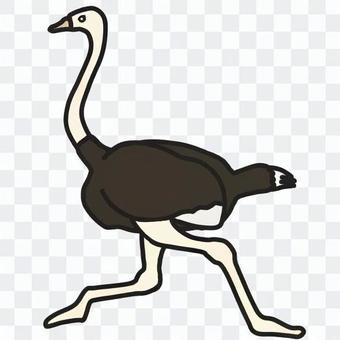 鴕鳥(彩色)