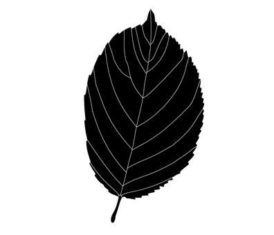 나뭇잎 「벚꽃」의 실루엣