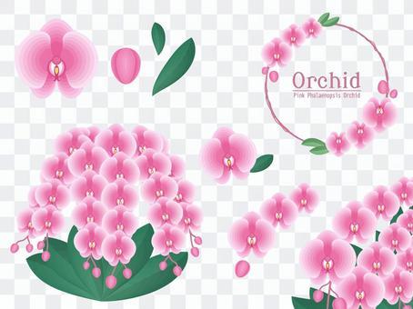 Set of phalaenopsis orchids