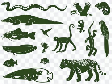Amazon's Animal