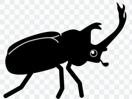 甲蟲(黑色和白色)