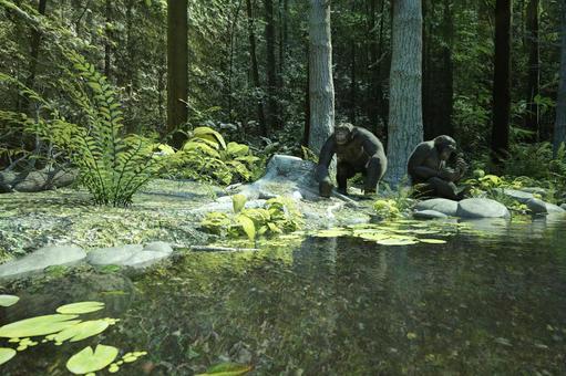 黑猩猩在森林裡