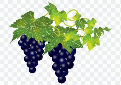 美味的葡萄16