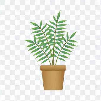 室内植物 - 棕榈表