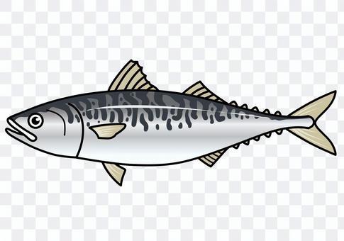 魚の「さば」のイラスト