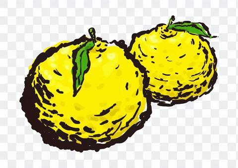 柚子柚子圖片字母樣式水彩冬至