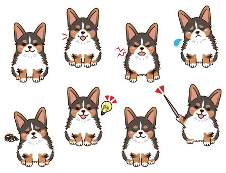 柯基犬(三色)姿勢合集