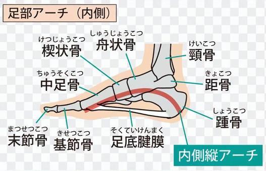 Foot arch (inside)