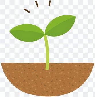 후타바 잎