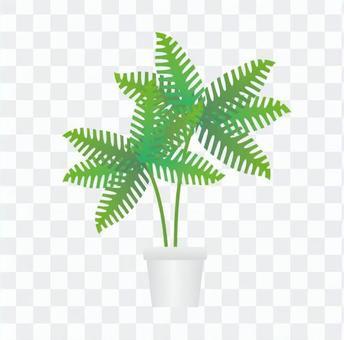 Houseplant - fern