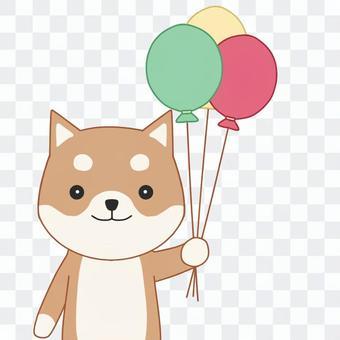 柴犬と風船